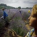 1980Summer CampThe lavander field1980Les grandes vacancesLe champ de lavandeBernard Faucon / Agence VU