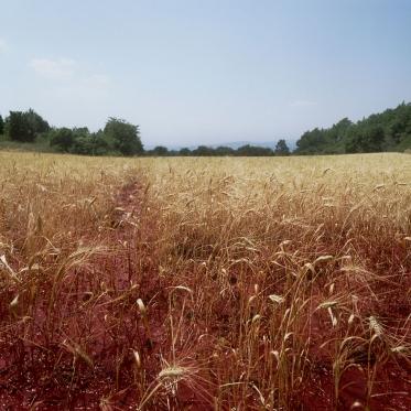 """France, 1991""""Idols and sacrifices"""", The wheat fieldFrance, 1991""""Les idoles et les sacrifices"""", Le champ de blÈ  © Bernard Faucon / Agence VU"""