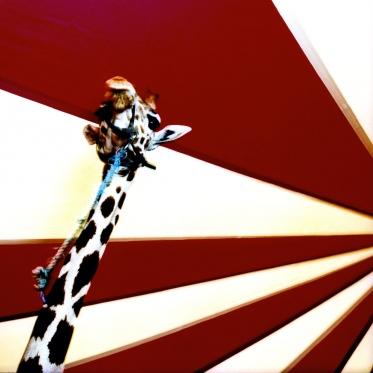 Paris, 2003Le cirque Moreno