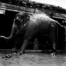 Eléphant dans un temple