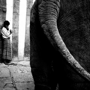 Cornac et éléphant dans un temple