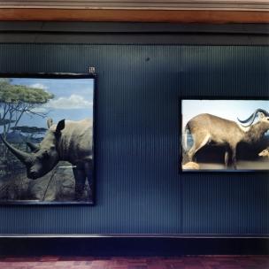 Safari, 2005