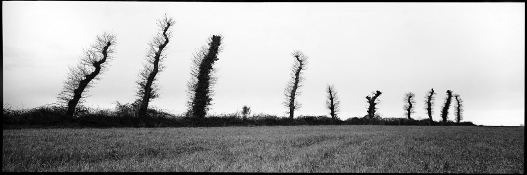 France, Brittany, March 1996 - Trees.