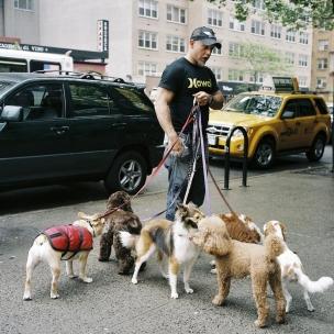 USA, New York, April 2009Dogkeeper.USA, New York, Avril 2009Dogkeeper.© Franck Ferville / Agence VU